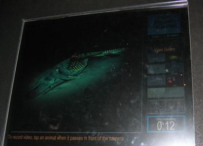 Monterey Bay Aquarium — Investigating Sunken Whales